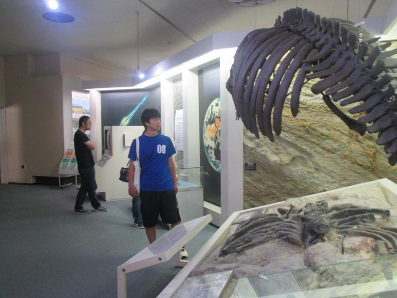 県立博物館 海牛化石のレプリカ前で